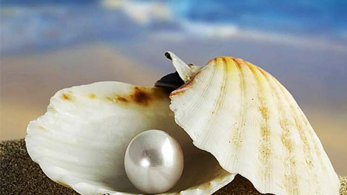 珍珠 認識 Pearl 高雄 買 天然珍珠 與購買指南與認知